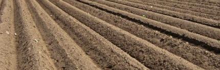 Засаждане на картофените семена